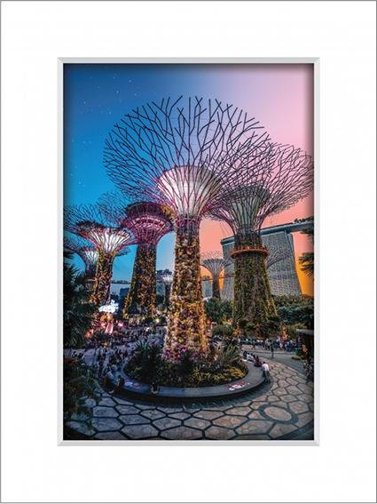 Gardens By The Bay 6
