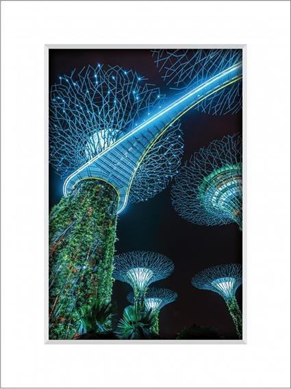 Gardens By the Bay 9